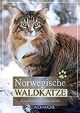 Norwegische Waldkatze: Skandinaviens sanfte Wilde (Cadmos Katzenbuch)