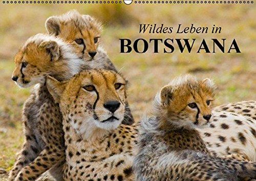 Wildes Leben in Botswana (Wandkalender 2017 DIN A2 quer): Im Reich der wildlebenden Tiere Afrikas (Monatskalender, 14 Seiten) por Elisabeth Stanzer