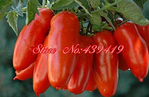200 / bag Riese große Tomatensamen -San Marzano Tomaten, Erbstück offen befruchteten Gemüsesamen, überlegenen Geschmack, für den Heim Bepflanzung