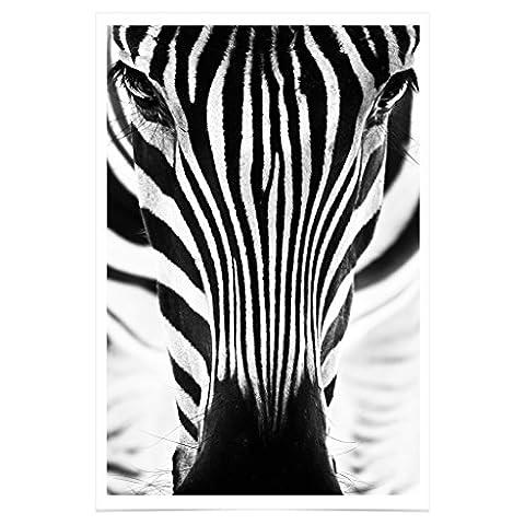 Jim Starks PH202A2 Schwarz weiß Poster Zebra Premium Fotopapier 42 x 61 cm