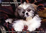 INDIGOS UG - Türschild FunSchild - SE681 - ACHTUNG Hund Shih Tzu - für Käfig, Zwinger, Haustier, Tür, Tier, Aquarium - DIN A4 PVC 3mm stabil