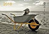 Bolonka 2018 (Wandkalender 2018 DIN A3 quer): Ein Wandkalender nicht nur für Bolonka - Liebhaber...