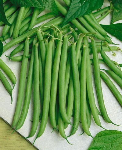 premier-seeds-direct-dwarf-french-bean-slenderette-includes-200-seeds
