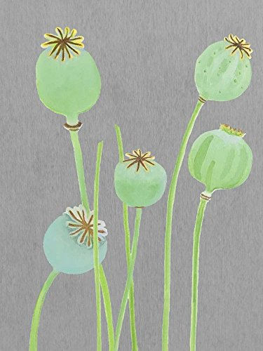 The Poster Corp India and Purry - Poppy Pods on Grey Kunstdruck (45,72 x 60,96 cm) - Poppy Pods