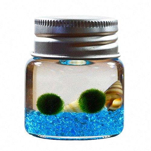 omem Seaweed Kugeln Glas Flaschen, Algen Moos Kugeln Glas Aquarium Terrarium