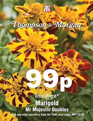 Thompson & ‿Morgan - Fleur - Souci Mr Majestic Doubles - 100 graines