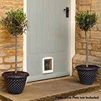 Hardy Standard Olive Trees (Pair)