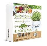 SeedBox SBMCUOR-Huerto Urbano Cultívame Mini-orégano, 17x4x17 cm