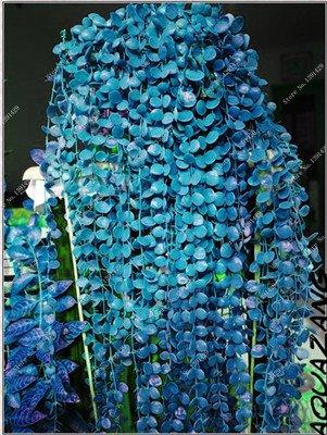 Multi Color Seed 100% Vrai Parthenocissus tricuspidata Seed, japonais Creeper Flowerpot Seed Pack Professionnel 20 Pcs / Sac 5