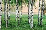 1art1 54698 Wälder - Birken Am See-Ufer 8-Teilig Fototapete Poster-Tapete 368 x 254 cm