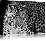 Prächtiger Leopard Schwarz/Weiß, Format: 100x70 auf Leinwand, XXL riesige Bilder fertig gerahmt mit Keilrahmen, Kunstdruck auf Wandbild mit Rahmen, günstiger als Gemälde oder Ölbild, kein Poster oder Plakat
