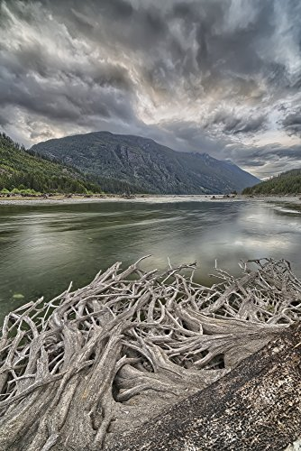 robert-postma-design-pics-roots-from-an-old-stump-along-the-shores-of-buttle-lake-strathcona-provinc