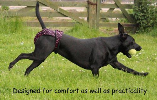 Glenndarcy Dog Pants Windelhose für Hunde, Größe L, Red Hearts - 5