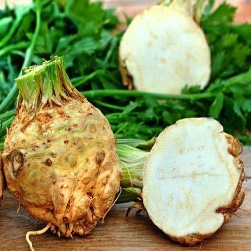 Portal Cool Samen Sellerie-Wurzel Apple-Gemüse Bio-Heirloom Russian Ukraine