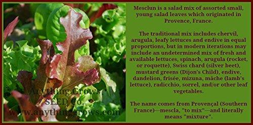 PlenTree Certified Organic Mesclun Mix Seed (1000Ct) Mixed Greens 2018