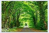 BHXINGMU Benutzerdefinierte Fototapete Für Wände 3D Wandbilder Tapete Waldweg Steht Auf Beiden Seiten Der Straße Bäume 220Cm(H)×300Cm(W)