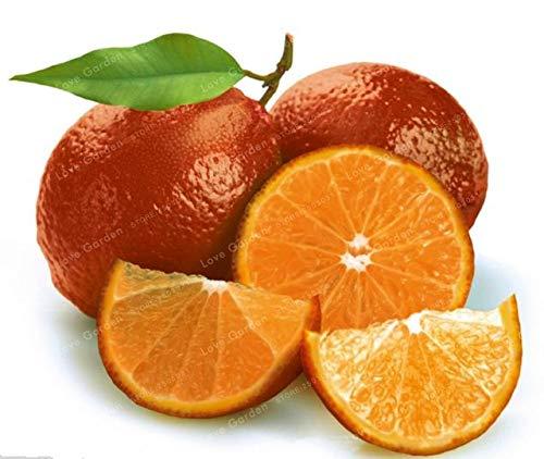 Bloom Green Co. 30 Pcs Lemon Tree Ú anche Blood Orange Organic frutta Bonsai alto tasso di sopravvivenza Bonsai rosso della calce Bonsai Healthy Food giardino della casa: 1