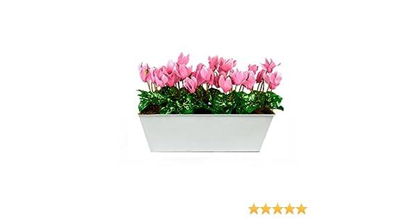 Blanc Tin bac /à Nourriture Pot de Fleurs 45/cm GreenBrokers Limited Coffret Artificielle Violet Cyclamen Jardini/ère