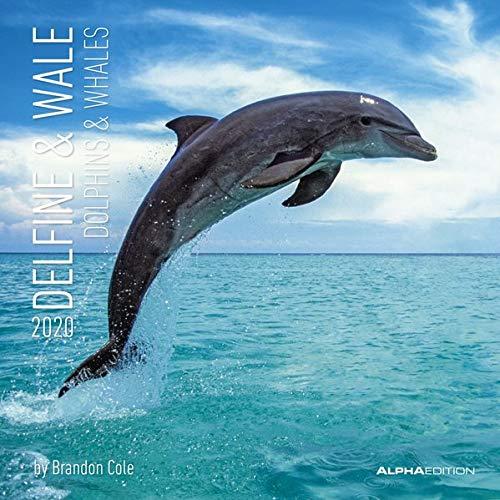 Delfine & Wale 2020 - Dolphins & Whales - Wandkalender - Broschürenkalender (30 x 60 geöffnet) - Tierkalender - Wandplaner: by Brandon Cole