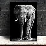 Animal Toile Peinte, Noir et Blanc Gris Zebra Elephant Tête de Lion Portrait Décoration murale Peinture photos pour maison moderne Décoration, Md4842, 40 * 50cm