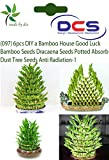 #5: DCS (097) 6 pcs DIY a Bamboo House Good Luck Bamboo Seeds Dracaena Seeds Potted Absorb Dust Tree Seeds Anti Radiation