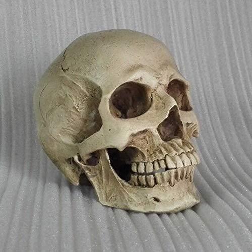 Anatomischer Totenkopfkopf Muskelknochen Zeichnung Künstler anatomische Heimdekoration Realistischer Harzkörper mit Textur Schule Pädagogik Wissenschaft Beige Antique, 1:2 skull head -