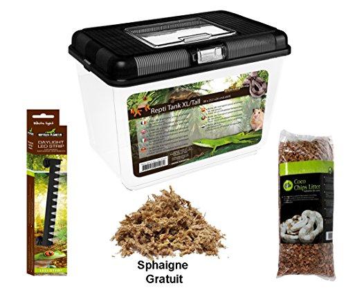 Reptiles Planet Kit con terrarios Insecto de plástico para Phasme 38x 23,5x 26cm, Talla XL/Tall