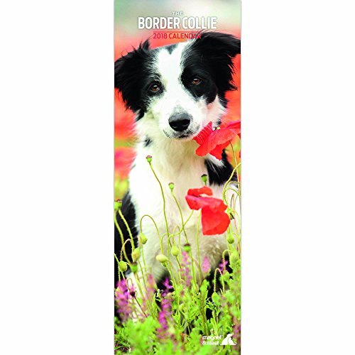 Border Collie 2018 Calendar