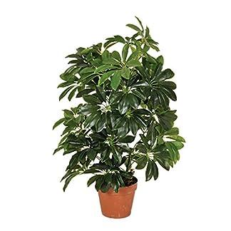Planta Artificial cheflera