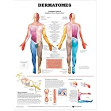 [(Dermatomes Anatomical Chart)] [ Prepared for publication by Anatomical Chart Company ] [March, 2004]