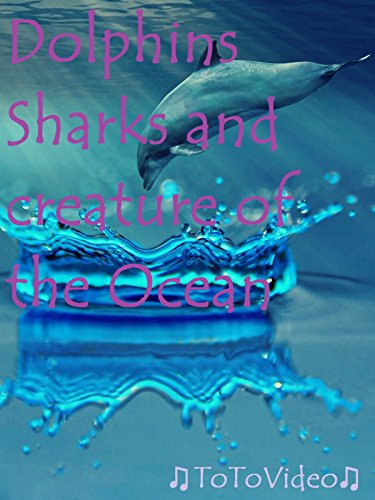 dolphins-sharks-and-creature-of-the-ocean