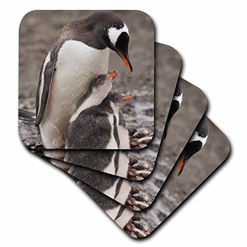 3drose-cst-74207-2-antarctica-aitcho-island-gentoo-penguin-an02-bja0046-janyes-gallery-soft-coasters