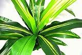 Geko 1-Stück groß 90 cm künstliche UV-beständigem Kunststoff Aloe