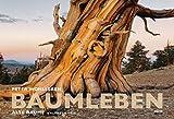 Baumleben: Alte Bäume ─ Kalender 2020 - Wandkalender