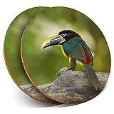 Destination Vinyl ltd, Set di 2 sottobicchieri Rotondi con - Aracari Brasiliano Tropical Bird Drink Lucidi/Protezione da Tavolo per Qualsiasi Tipo di Tavolo #21332