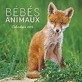 Calendrier mural Bébés animaux 2019