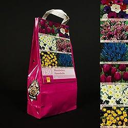 Inter Flower 150 Bulbos de flores Mix 6 Variedades por separado empaquetado Tulipanes,Anémonas,Narcisos,Allium,Crocus,Muscari en embalaje jetzt planta sí mismo crecer deje que en el jardín/para Casa