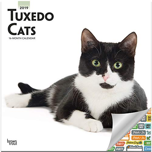 Tuxedo Katzen Kalender 2019 Set - Deluxe 2019 Smoking Katzen Wandkalender mit über 100 Kalenderaufklebern (Smoking Cats Gifts, Bürobedarf) -