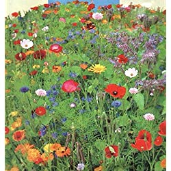 Portal Cool Wildblumen - Mixed - 5 G Blumensamen -bezüge ca. 2 qm/Buzzy 04910