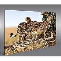 Suchergebnis auf f r gepard bilder poster kunstdrucke skulpturen m bel - Poster wanddurchbruch ...