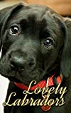 Lovely Labradors (Dogs Picture Book - Precious Pooches 4)