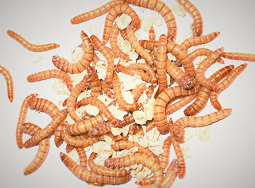 mealworm-starter-kit