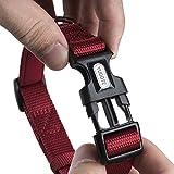 Yudote Verstellbarer Nylon hundehalsband mit weicher Neopren polsterung für welpen Kleiner Hunde Halsumfang 25-38cm Rot
