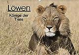 Löwen - Könige der Tiere (Wandkalender 2020 DIN A2 quer): Erleben Sie die grossen Katzen Afrikas in ihrem natürlichen Lebensraum. (Monatskalender, 14 Seiten ) (CALVENDO Tiere)