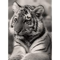 LARGE TIGER CUB CANVAS ART PRINT 27 X 20 INCHES READY TO HANG preiswert