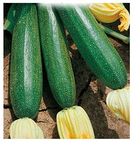 40 Aprox. - Graines d'hybride de courgette hybride - Cucurbita Pepo dans son emballage d'origine fabriqué en Italie - courgettes