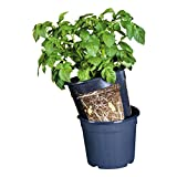 Floragard Potato Pot • 2 in 1 Topfsystem