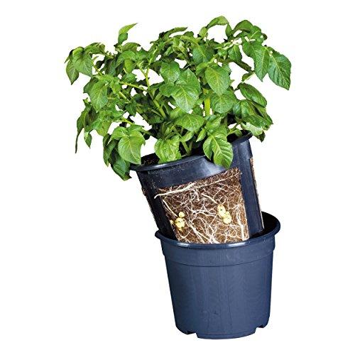 Floragard Potato Pot Kartoffel Topf • zur Anzucht von eigenen Kartoffeln • 2 in 1 Topfsystem