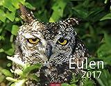 Eulen - Kalender 2017 - Weingarten-Verlag - Wandkalender - 44 cm x 34 cm