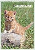 Katzenkinder (Tischkalender 2019 DIN A5 hoch): Katzenkinder erobern die Welt (Planer, 14 Seiten ) (CALVENDO Tiere)